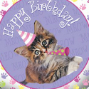 Cat & Kitten Birthday