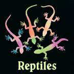 Reptile Party Supplies